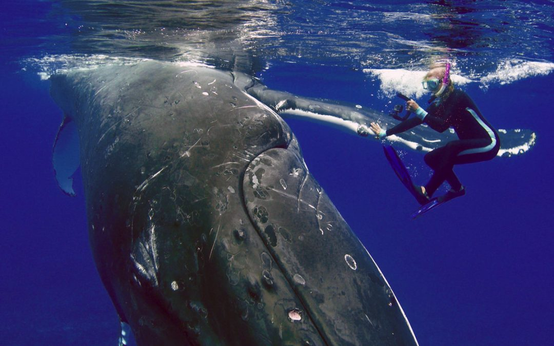 Nan Hauser Swimming With Whale